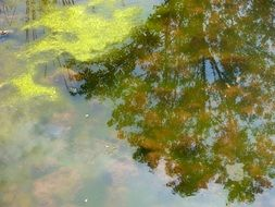 green tree is reflected in water