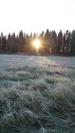 cold winter frost on the grass