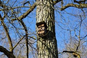 birdhouse on a tree trunk
