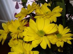 a bouquet of yellow daisies