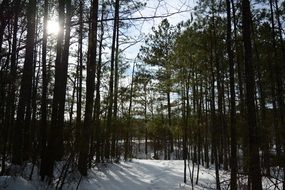 Winter snow Forest Trees sunshine view