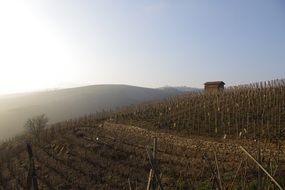 Picturesque vineyards in the haze in france
