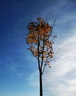 The crown of the tree in autumn