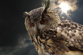 owl with Red eyes portrait