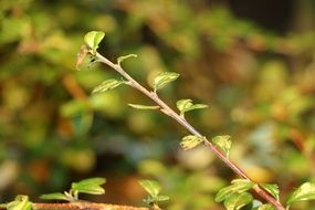 young tree branch closeup