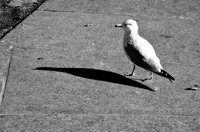 seagull stands on a concrete pier