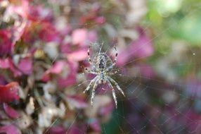 Spider on the web on the garden