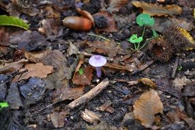 small mushroom among dry leaves