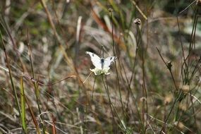 white butterfly on the wildflower