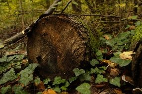 brown wood log in forest scene