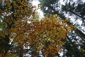 autumn forest Yellow tree leaves sky view