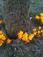 Picture of orange spring flowers