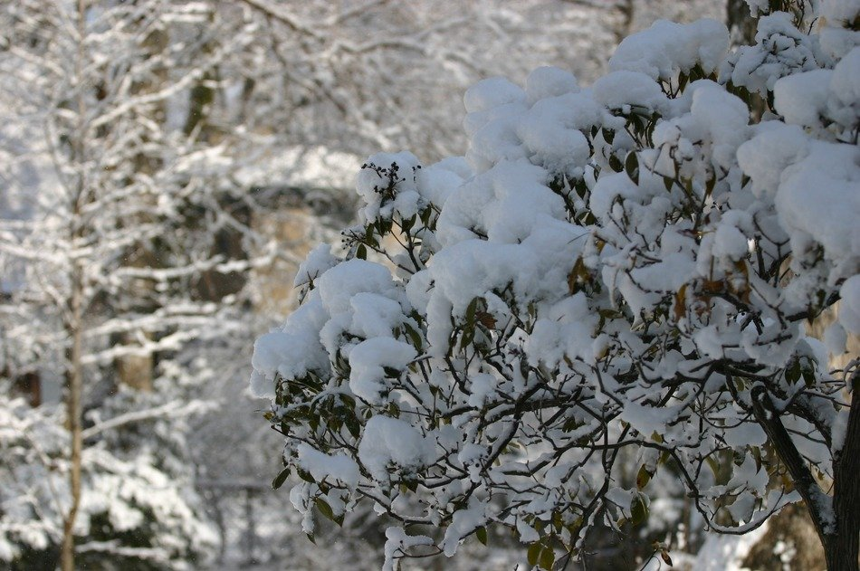 vegetation in the snow