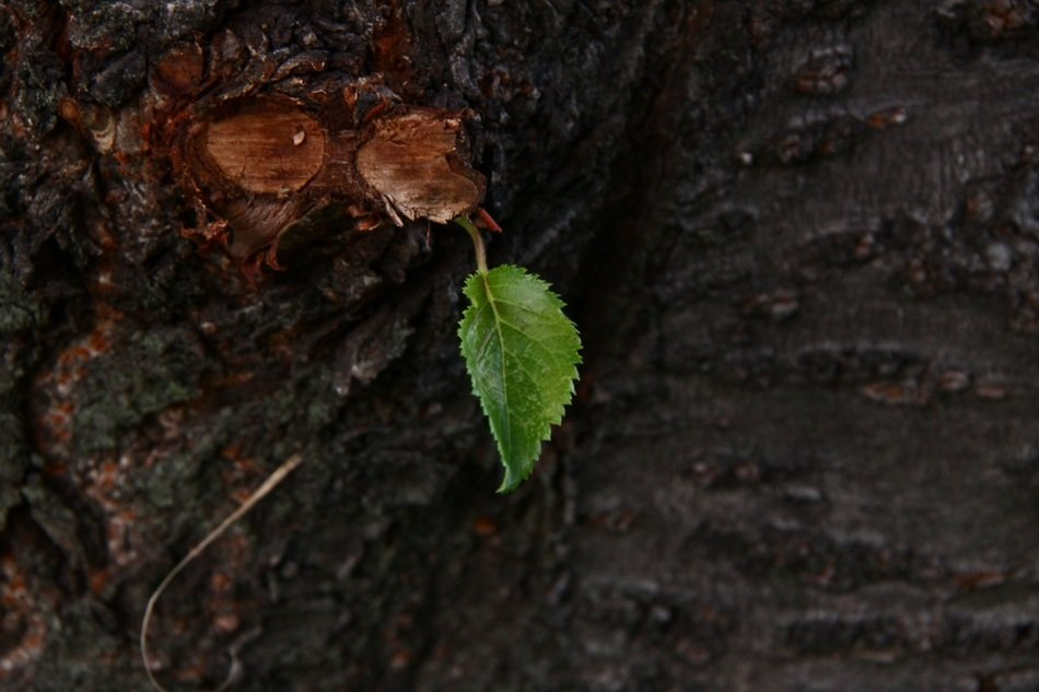 tender green leaf on the tree