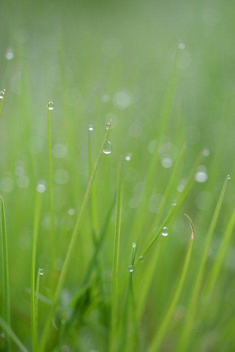 grass blade of drop water macro photo