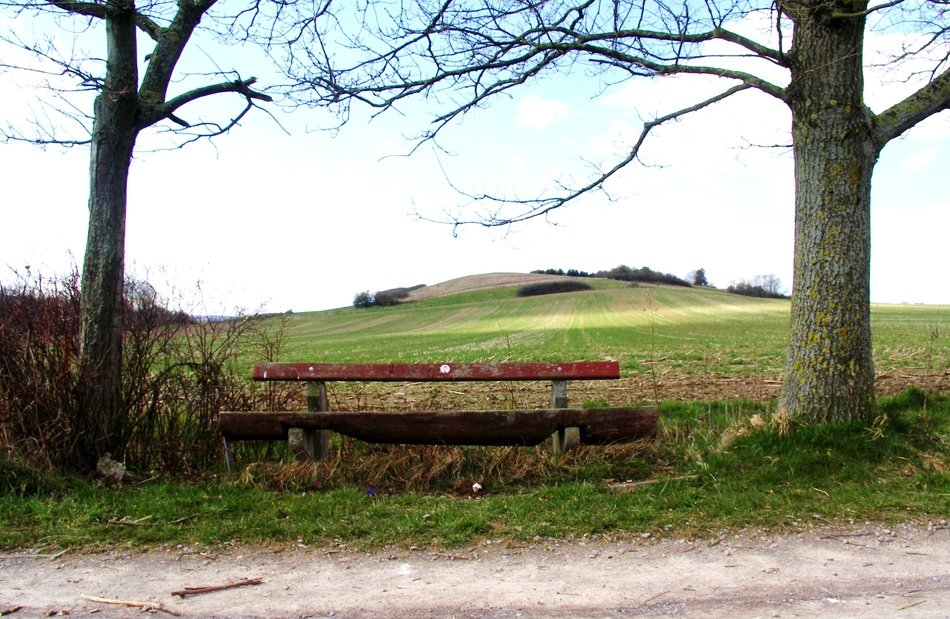 wooden bench in nature