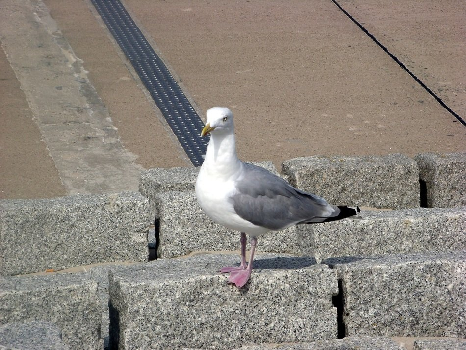 seagull on a stone wall