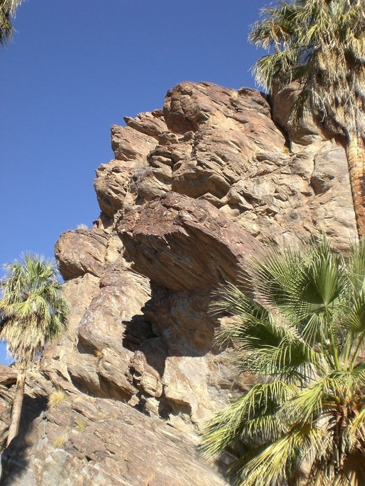 palm canyon in california close up