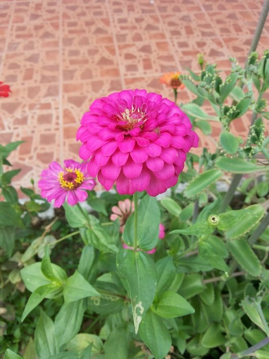 Bright pink flower on the flower bed