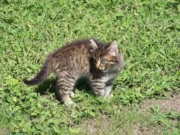 angry young cat on green grass