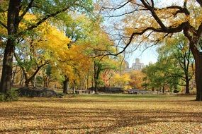 autumn central park manhattan