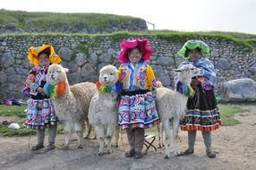 llama Alpaca and Andean women