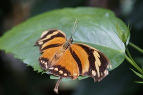 tropical butterfly on a green leaf
