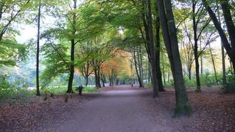 Landscape of autumnal park in hamburg