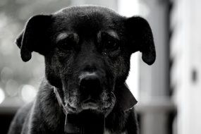 picture of a dog black and white