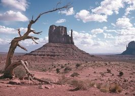 Dead tree in monument valley in Arizona