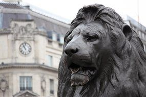 bronze lion statue on Trafalgar Square