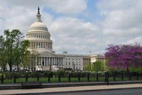 capitol building in park at spring, us, washington dc