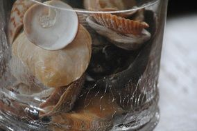seashells glass container sea