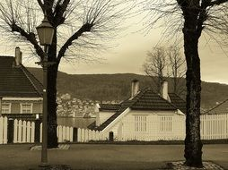 two gray trees on the background of white houses