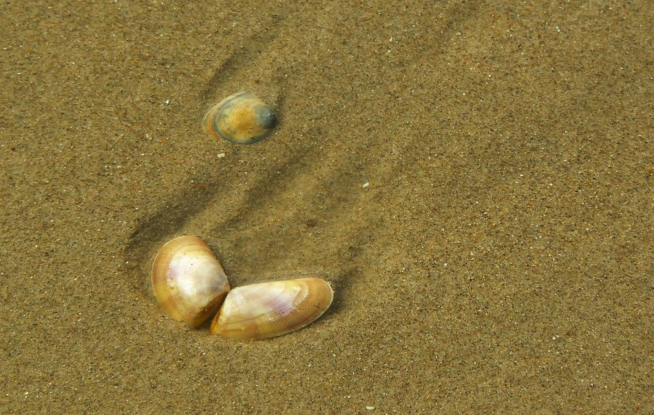shells on a sand beach as a jewels