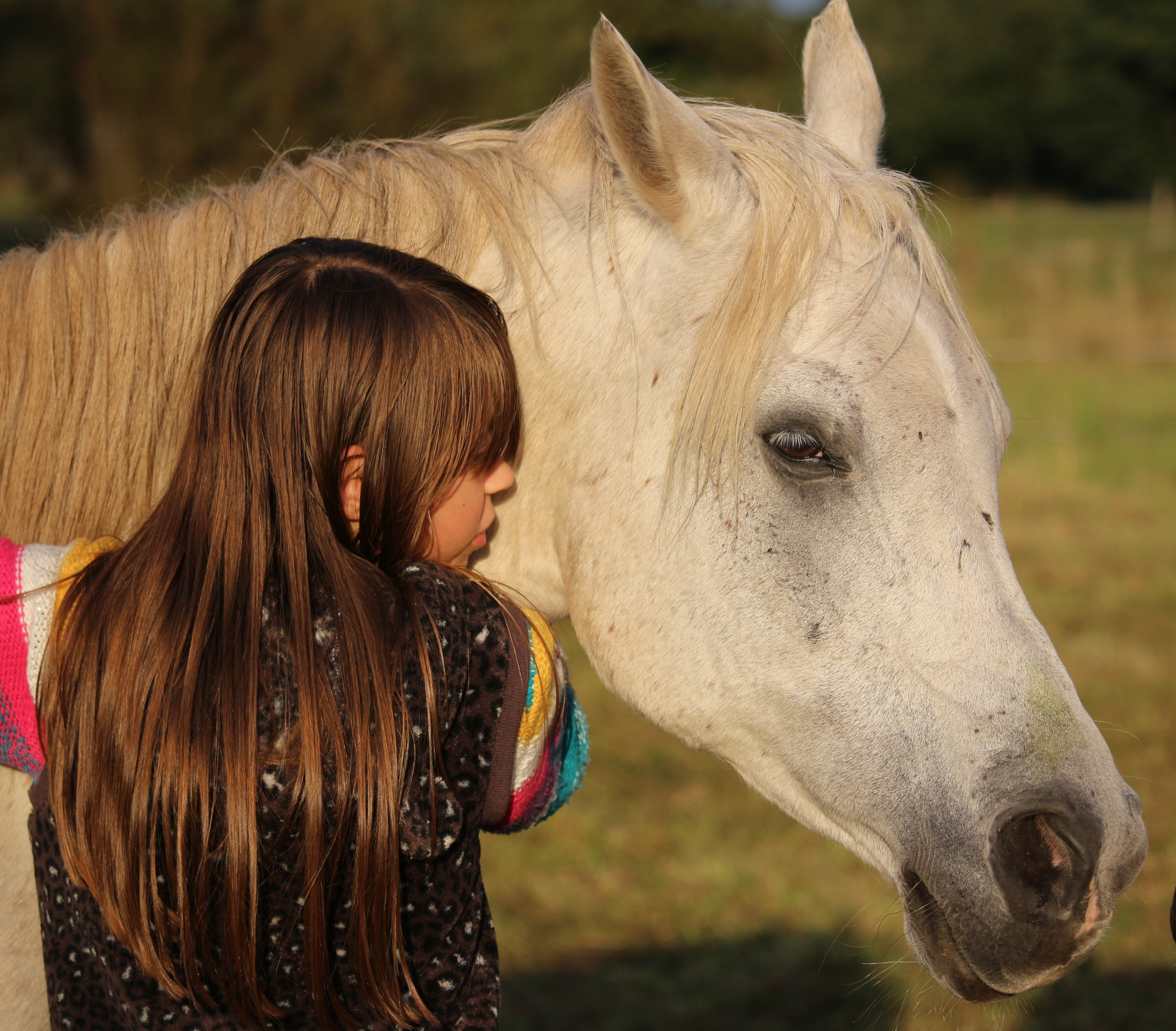 Girl and white horse free image