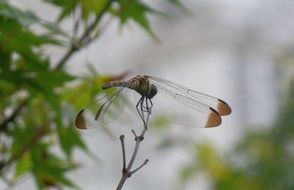 Dragonfly on a bare branch