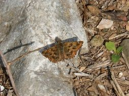 brown butterfly on stone on dry grass