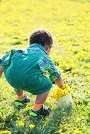little boy collecting dandelions