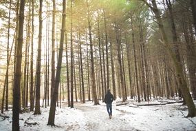 lonely man walking in the winter forest