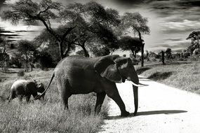black-and-white photo of elephant and baby elephant