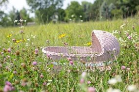 baby bassinet on the summer meadow