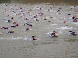 competition of open water swimmers