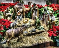 nativity manger christmas jesus