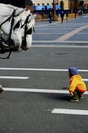 little boy looks at horses curiously