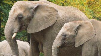 family of elephants on a background of green trees