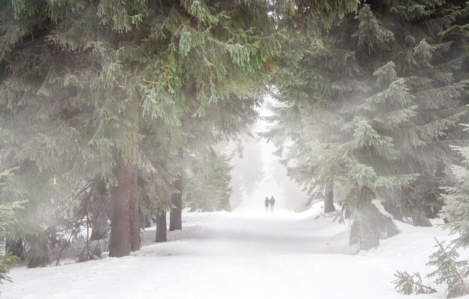 People on a walk in the winter forest