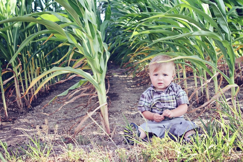 Cute young child is on a cornfield