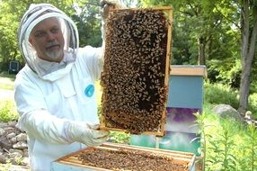 Frame of the beekeeper