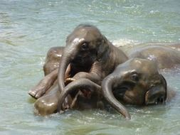 baby elephants playing in the water